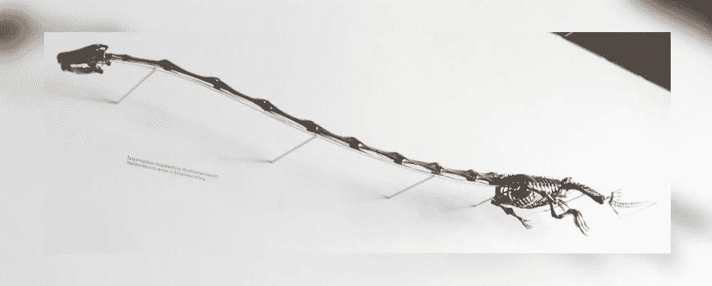 Cientistas descobriram finalmente como esse réptil antigo vivia com um pescoço absurdamente longo