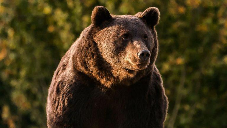 Príncipe é acusado de matar o maior urso da Roménia