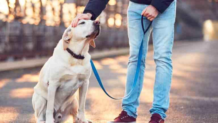 Esse é o motivo pelo qual você não deve apressar seu cachorro no passeio