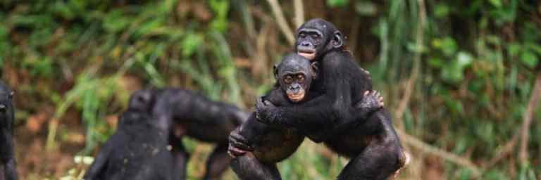 Macacos foram observados começando e terminando interações iguais aos humanos