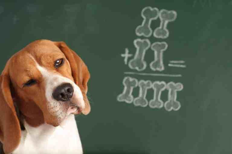 10 raças de cachorros mais inteligentes