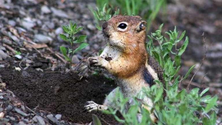 Esquilos tem quatro tipo de personalidades que moldam seus ecossistemas