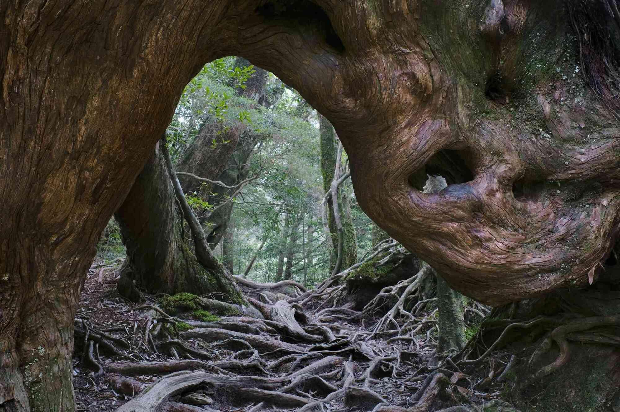 Floresta mais antiga do mundo não era como se imaginava