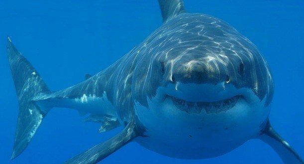 segredos do fundo do mar nova odessa fatos e eventos