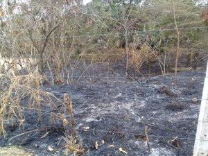 Incêndio destrói bosque no Klavin em Nova Odessa