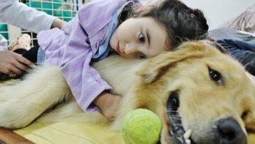 Cachorros que farejam câncer oferecem novas opções de testes fatos e eventos (4)