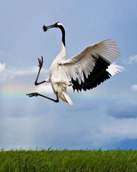 As aves mais raras do mundo fatos e eventos (6)
