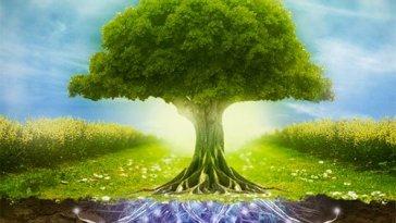 Natureza e a Saúde Mental nova odessa fatos e eventos (12)