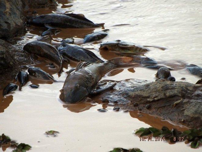 Poluição de Mares e Rios nova odessa fatos e eventos (10)