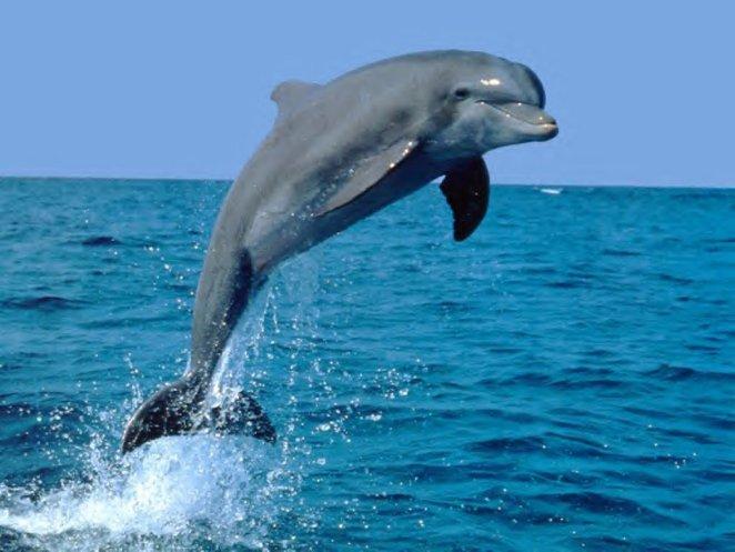 Poluição de Mares e Rios nova odessa fatos e eventos (4)