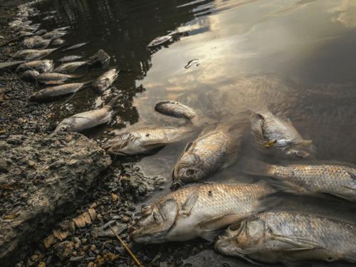 Poluição de Mares e Rios nova odessa fatos e eventos