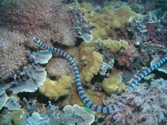Cobras venenosas nova odessa fatos e eventos (2)