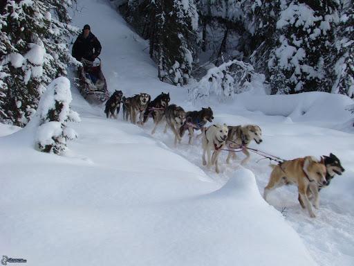 Cães que vivem muito bem na neve nova odessa fatos e eventos (14)