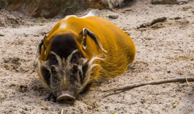 Animais do Pantano nova odessa fatos e eventos (12)