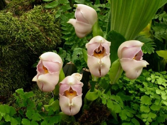 Flores Bizarras nova odessa fatos e eventos (2)