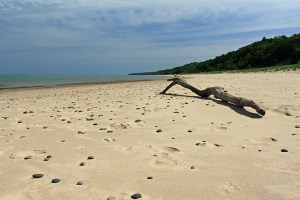 drift-wood-on-beach