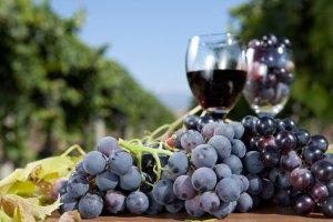 offerta mese gennaio 2017 vino rosso fattoriadelgiglio