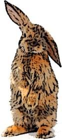 conejo-erguido2