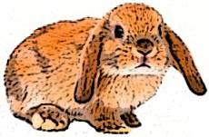 conejo-krolik