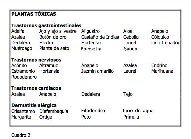 PLANTAS TOXICAS PARA EL GATO