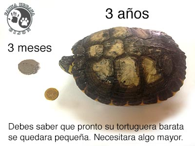 tortucomparativa