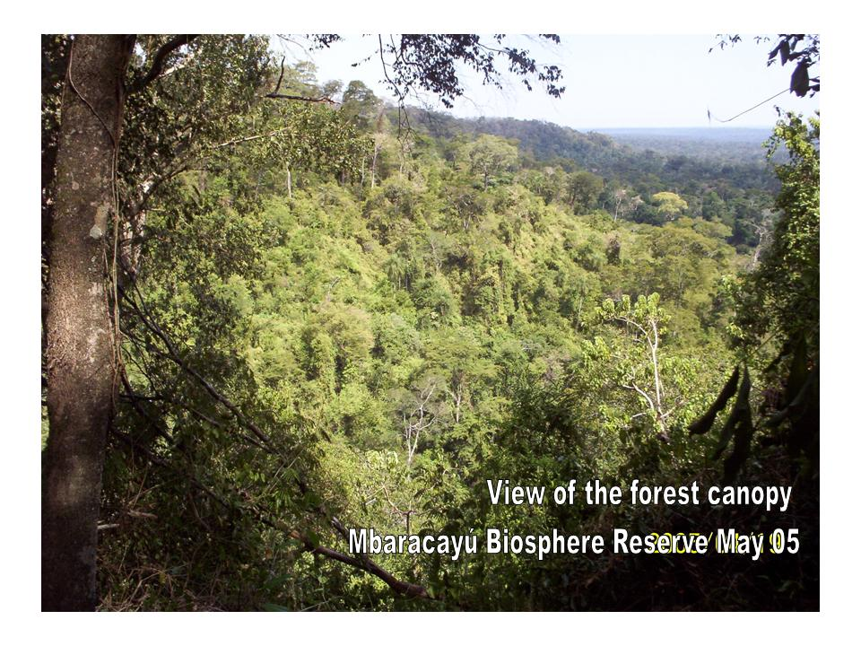 The atlantic forest has ecoregions within the following biome categories: Fauna Paraguay The Atlantic Forest