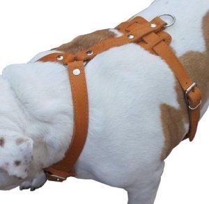 Harnais en cuir véritable pour chien, 73,7cm -37«poitrine, 2,5cm larges Sangles, Doberman, pitbull, Bullterrier