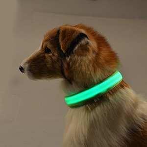 Roblue Colliers LED Lumineux pour Chiens Chat Animaux de Compagnie