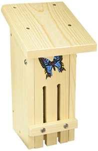 Stovall 14H Bois Petit Papillon Habitat