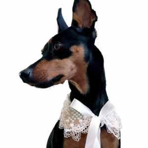 One Tail Four Paws Une Queue quatre pattes Perle Dentelle Animal de compagnie Collier, Medium, crème