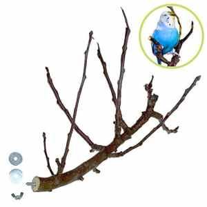 aufregend en bois naturel verzweigte Perchoir pour oiseaux en bio Wild Fruits   disponibilité limitée