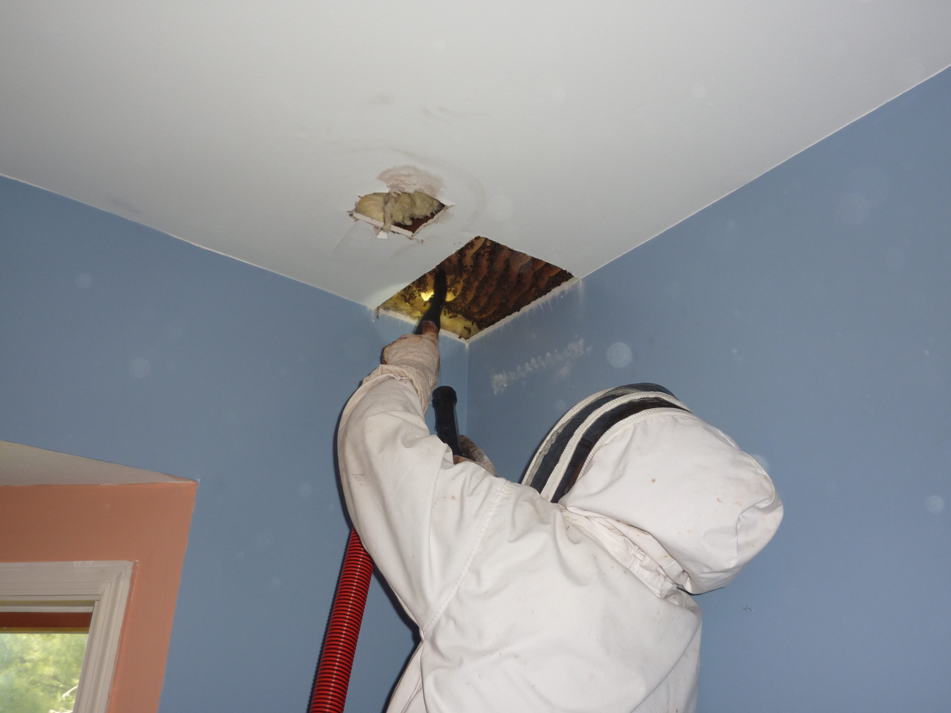bee removal st louis