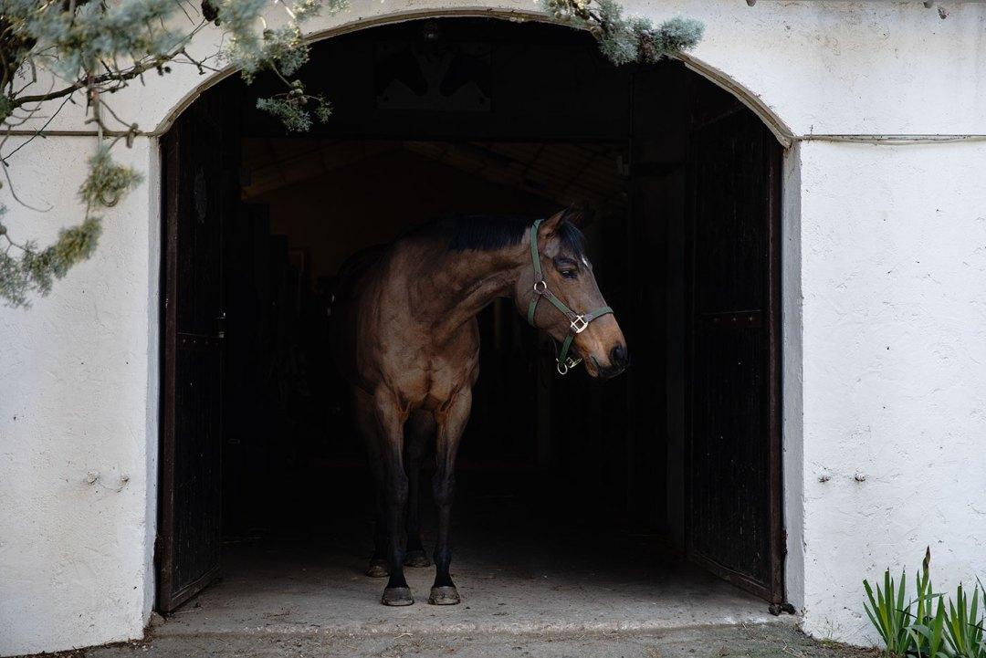 Jument pur sang anglais, fond noir équin - Faustine Gauchet