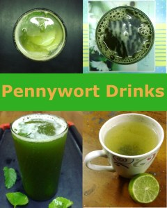 Pennywort drink recipes