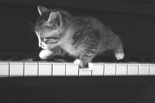 Black Cat Fall Wallpaper Kitten On Piano Favething Com