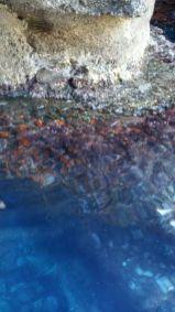 Marettimo Escursione Grotta Perciata Astroides calycularis