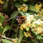 Phase 2: à Favignana triomphe au printemps… en attendant le redémarrage
