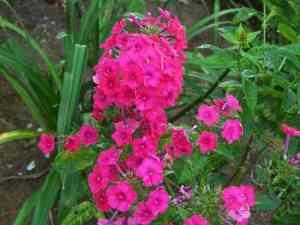 garden-tour-19-500