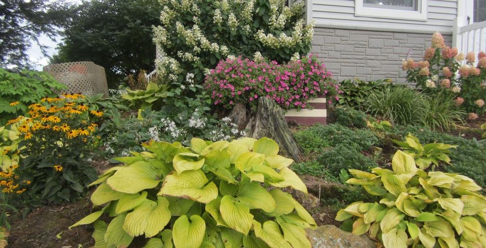 How Much Water Do Hostas Need Favorite Perennials