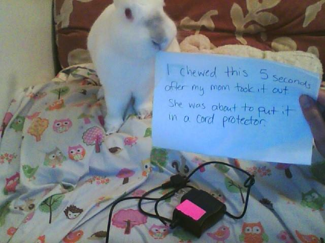 21 naughty bunnies confess