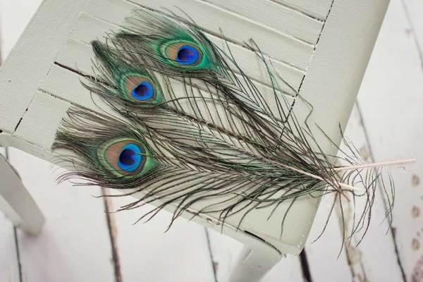 Stunning Peacock Feathers