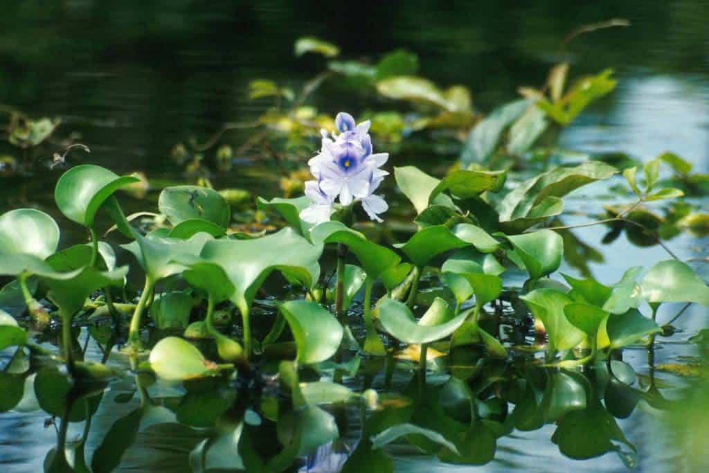 Plantas que Filtram a gua Como Utilizlas