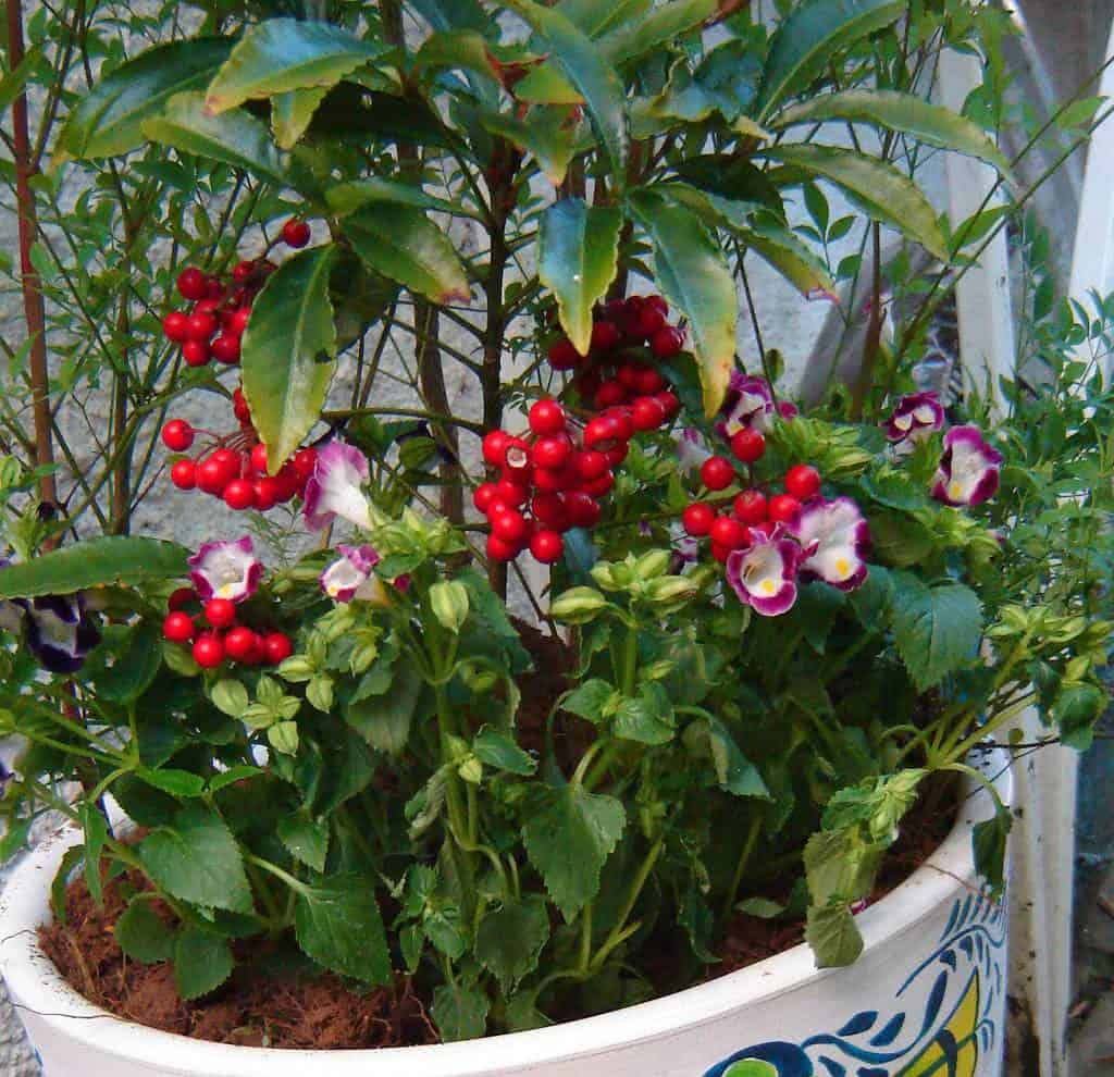 Arranjos de Plantas em Vasos Grandes Como Fazer  FazFcil