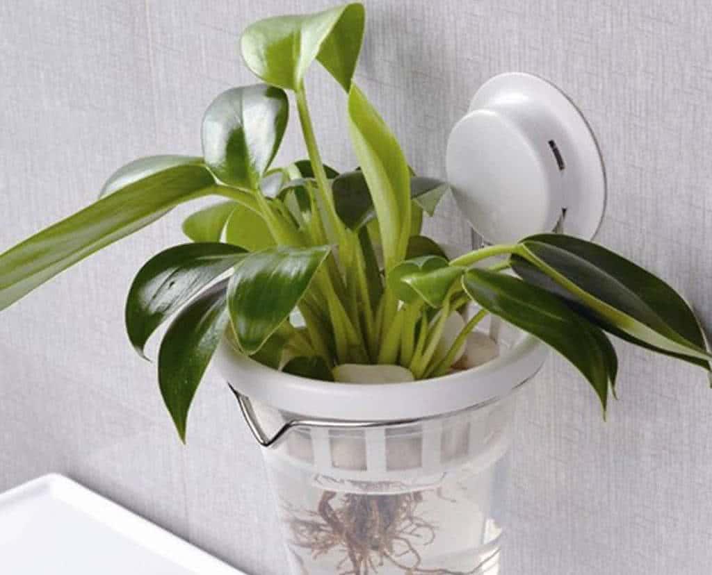 Plantas Ornamentais que Podem ser Cultivadas com Hidroponia
