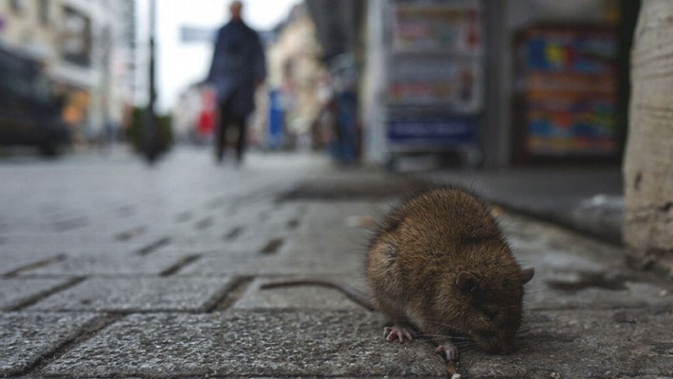 Hantavirus death in China – FBC News