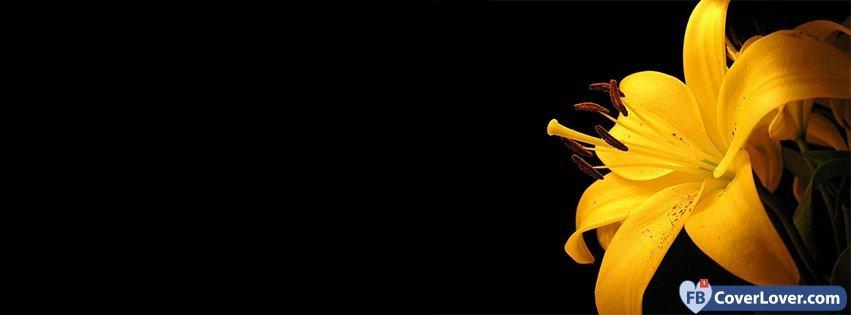 Cute Dreamcatcher Wallpaper Beautiful Yellow Flower Flowers Facebook Cover Maker