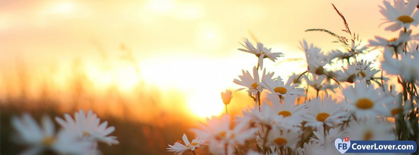 Love Relationship Quotes Wallpaper Daisies Flowers At Dawn Flowers Facebook Cover Maker