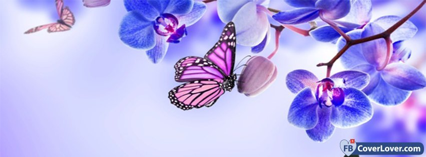 Bollywood Wallpapers With Love Quotes Orchids And Butterfies Flowers Facebook Cover Maker