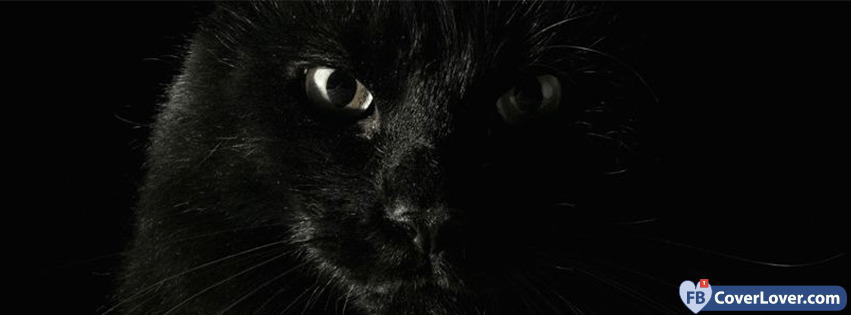 Wallpaper Download Cute Lovers Black Angry Cat Animals Facebook Cover Maker Fbcoverlover Com