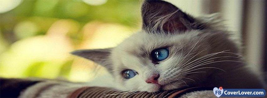 Cute Anime Kitty Wallpaper Sad Cat Animals Facebook Cover Maker Fbcoverlover Com